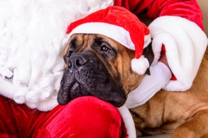 Artists For Animals: Photos With Santa
